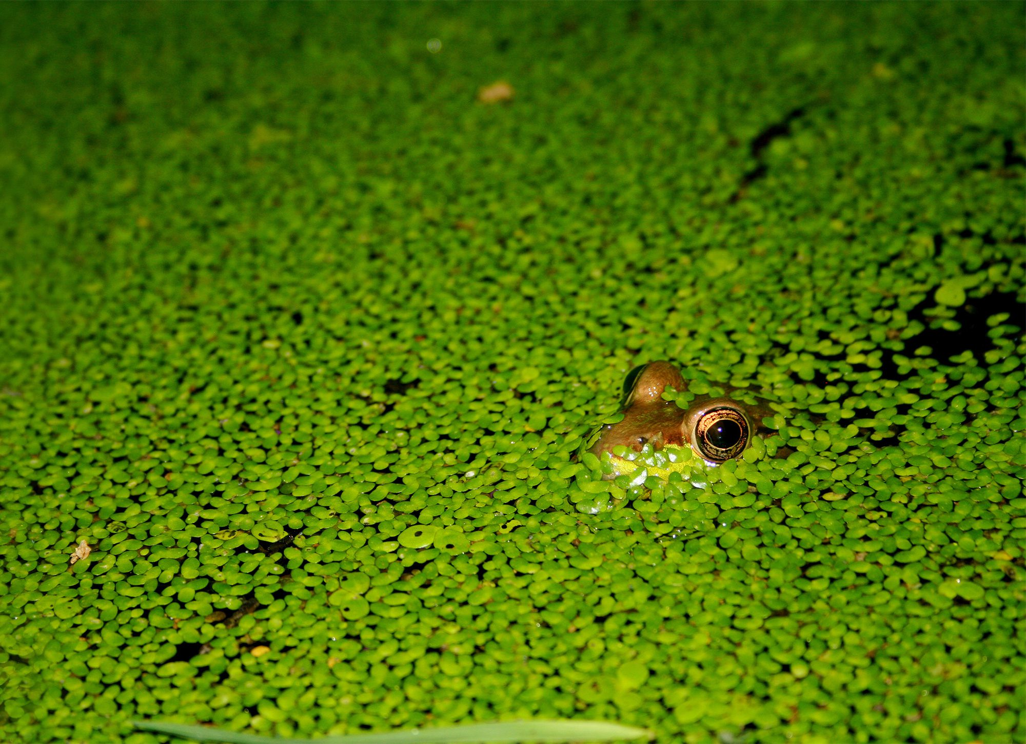 We're managing Land for biodiversity to support unique animals like this frog. Photo by Mike Fox
