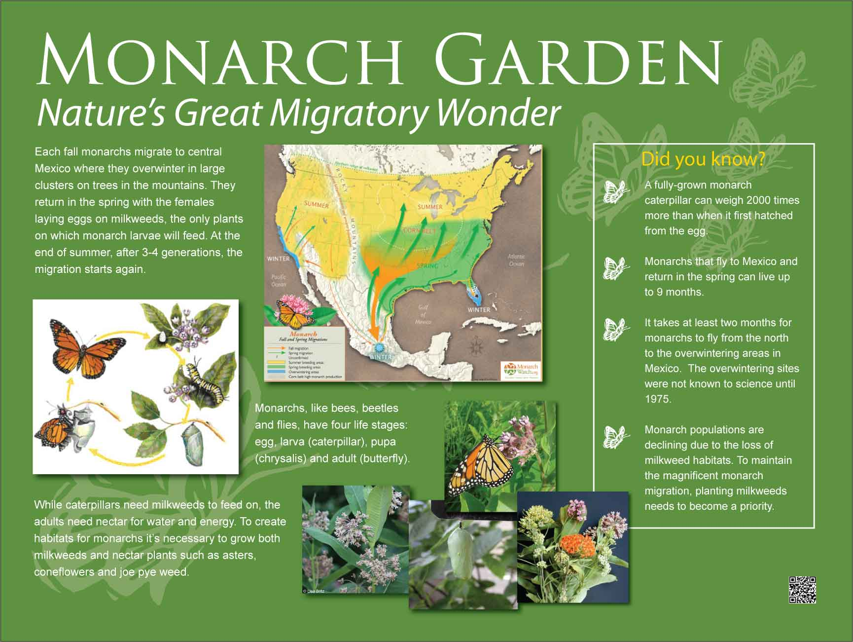 monarch information to support pollinators