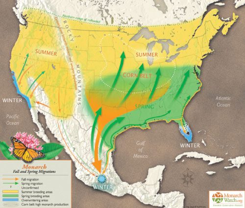 support pollinators: map of monarch butterfly migration